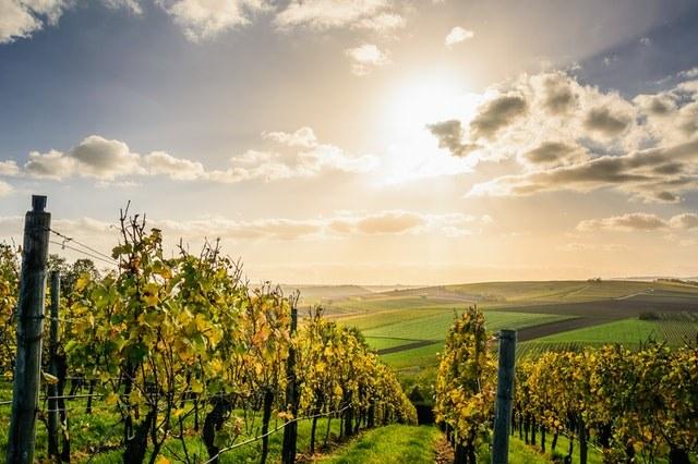 Branch & Vine Coverage | Vineyard Insurance & Orchard Insurance