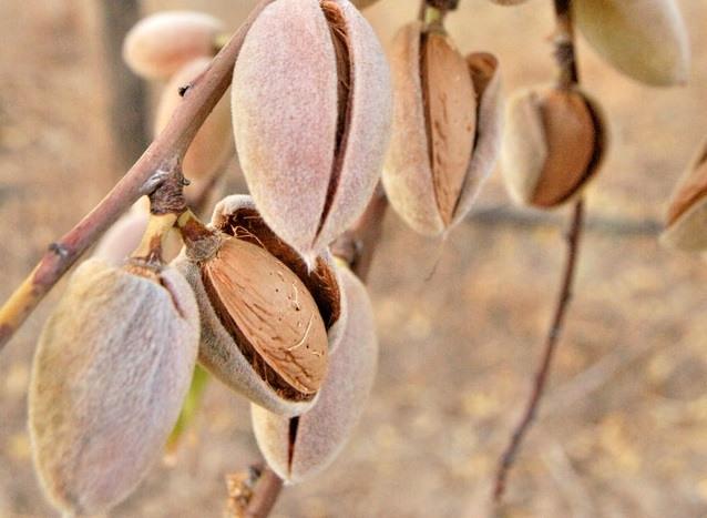 Peak Season Coverage | Vineyard & Orchard Insurance