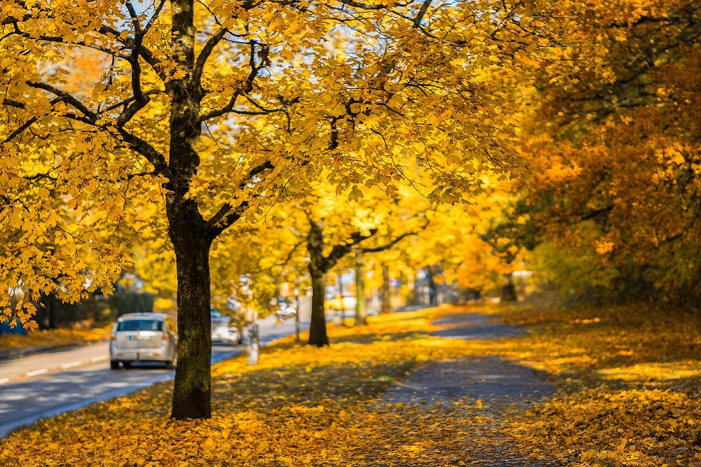 Cars Parked on Road in Autumn